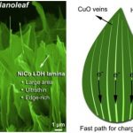 Korea: Nano-leaf makes Hydrogen Energy